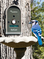 Motion Activated Wildlife Camera